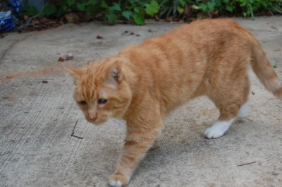 Elvis the blind cat in October 2008